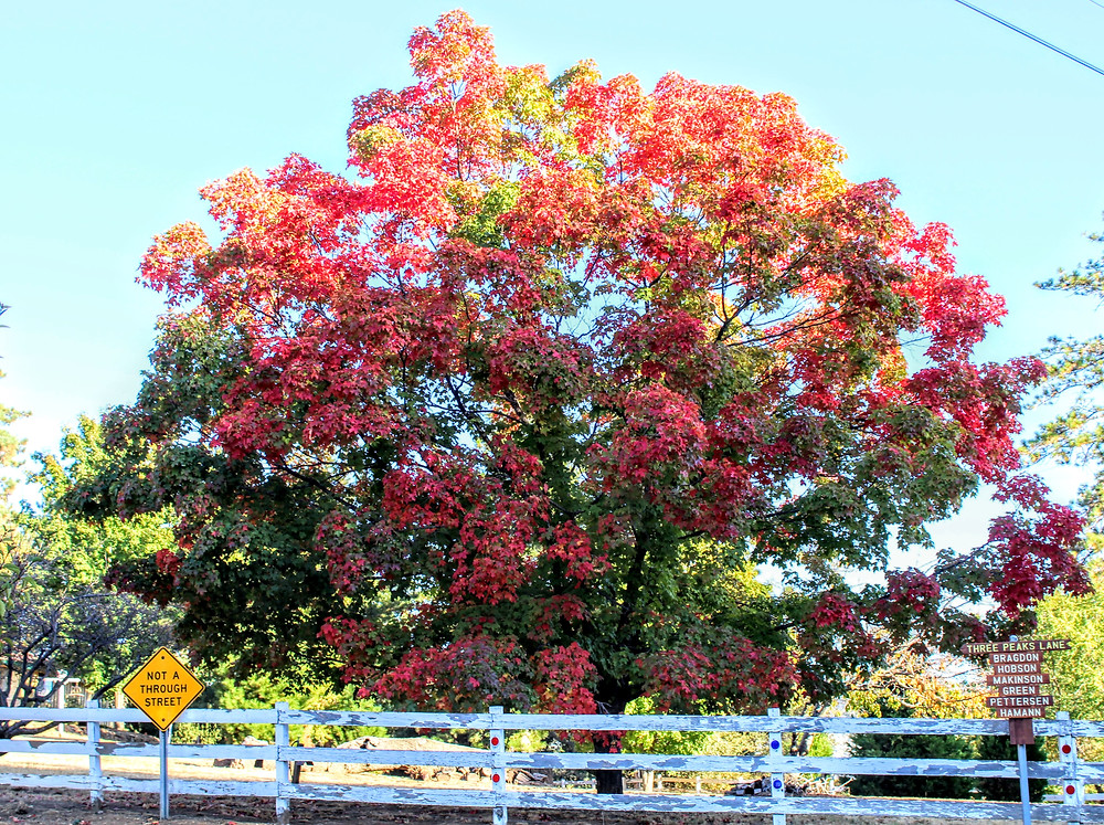 Fall in Julian, CA