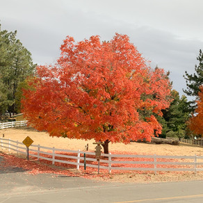 November in Julian, CA