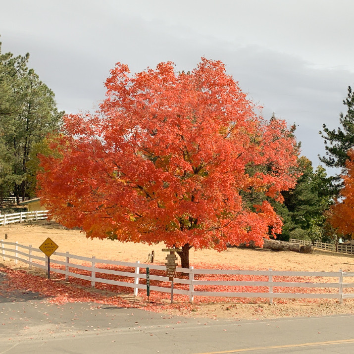 Fall colors in Julian, CA