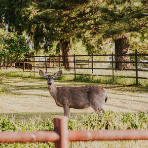 Unforgettable Animal Encounters in the San Diego Backcountry
