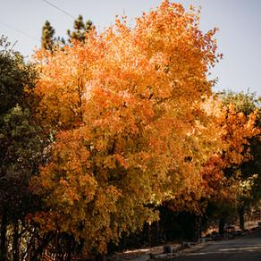 Where to See Fall Colors Near Julian