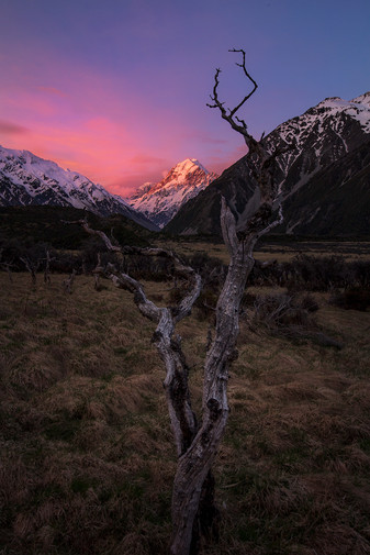 MT COOK, DEAD TREES