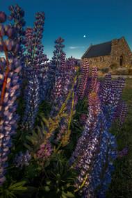 CHURCH OF GOOD SHEPHERD, LUPINS