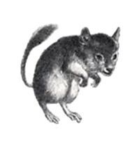 mouse_edited_edited.png