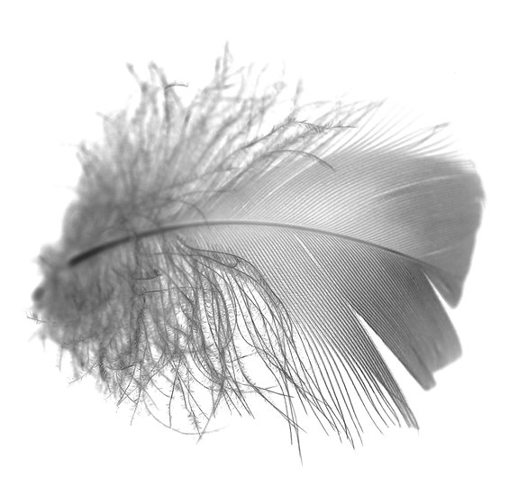Feather Photo Print(IN STOCK)Black and White /5x5