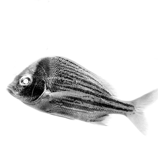 FISH Photo Print ( in stock)  5x5