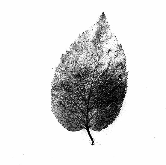 Leaf Photo Print  (in stock) 5x5
