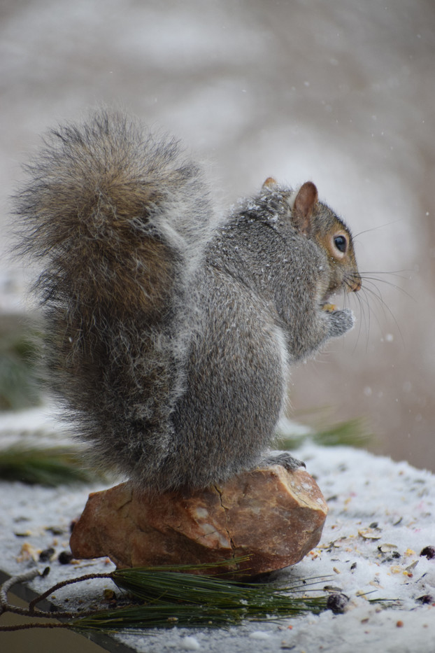 squirrel eats all the birdfood!