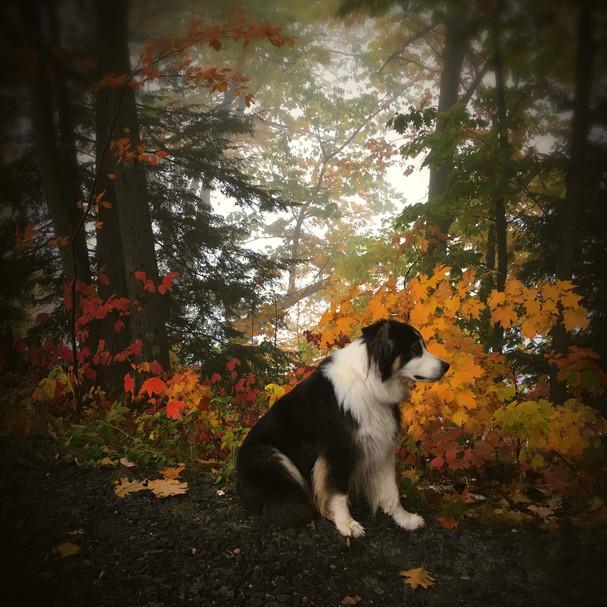 My Dog in Autumn