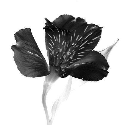 PRAIRIE FLOWER photo print