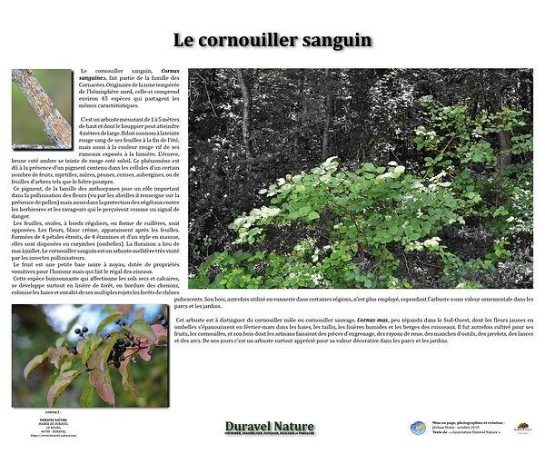 cornouiller_sanguin.jpg