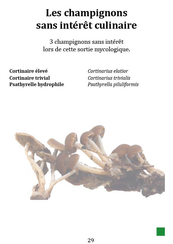 Les champignons sans intérêt culinaire