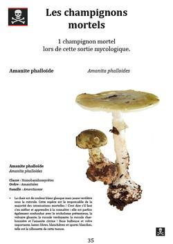 Les champignons mortels