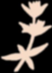 fleur-site-garance_edited.png