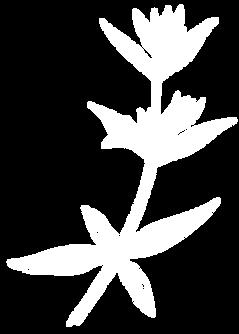 fleur-site-garance.png