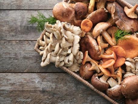 Settembre: i funghi