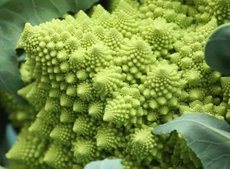 Novembre: il broccolo romanesco
