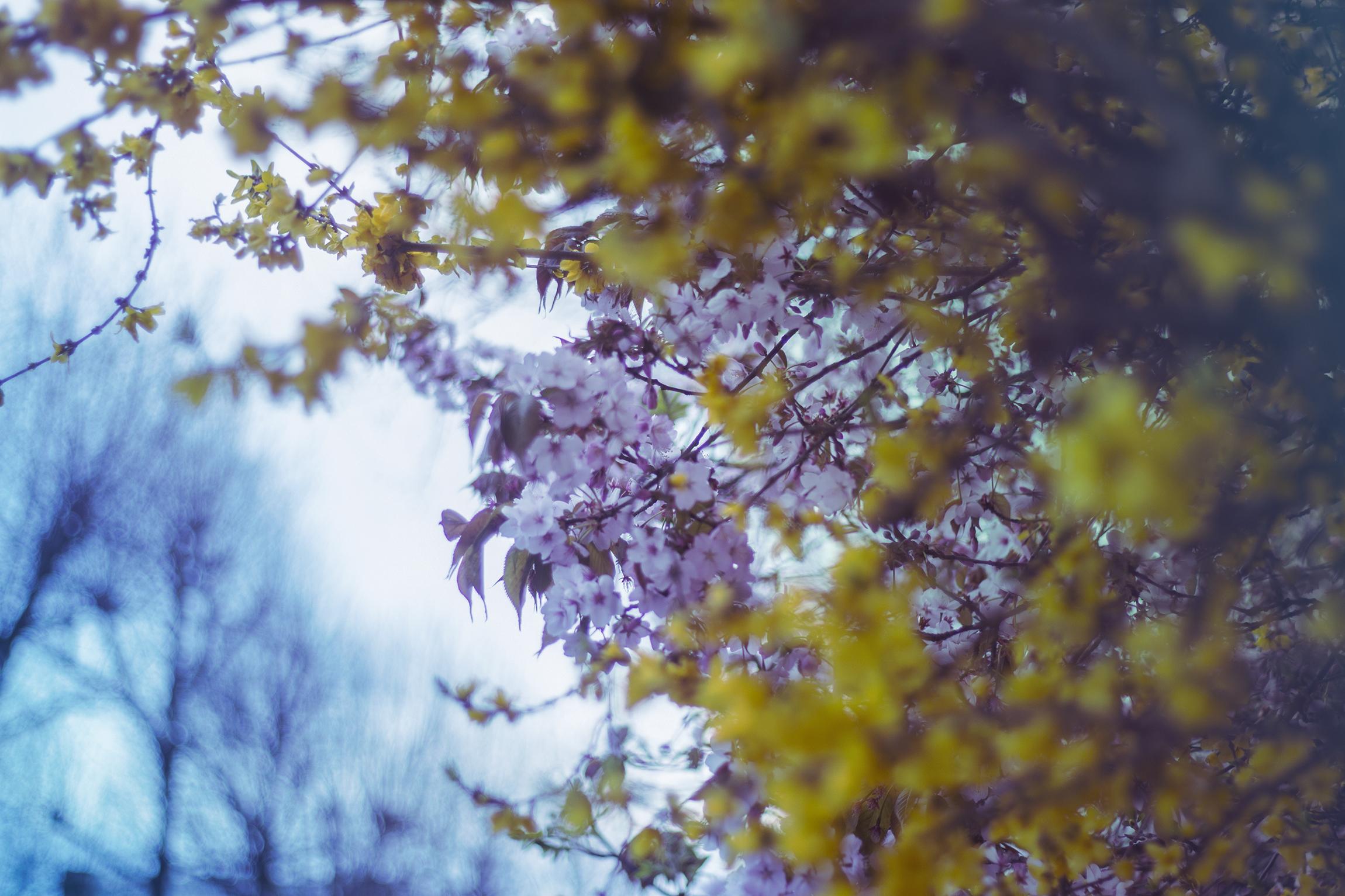 Spring 1 IMG_0566