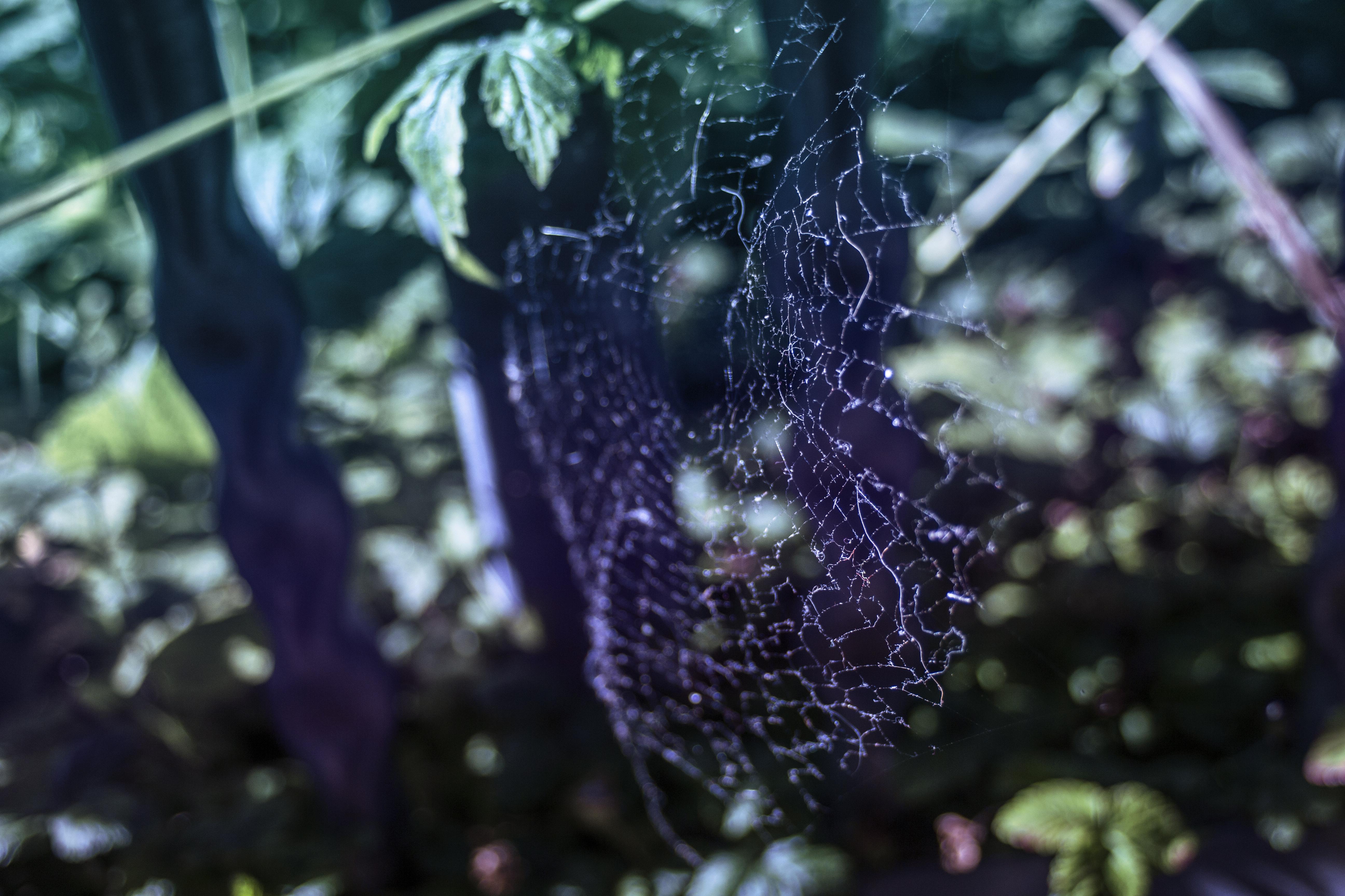 Web Light