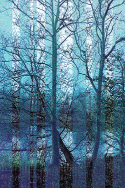 Blue Mirrored Trees