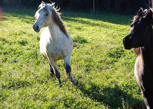 caballo, caballo corriendo, caballo bonito