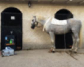 Biorresonancia para caballos, Biorresonancia Paul Schmidt, Rayonex, bioenergía, Reiki, Ondas electromagneticas, terapias naturales