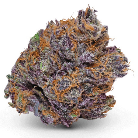IS Cannabis Really Antibacterial? YESSSSSSS!