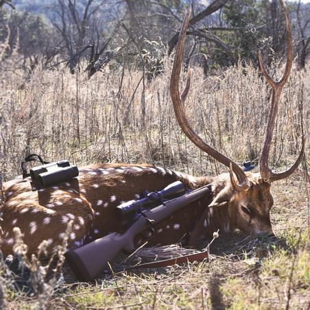 Axis Deer edited.jpg