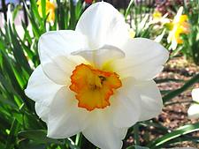 Spred Garden Flowers