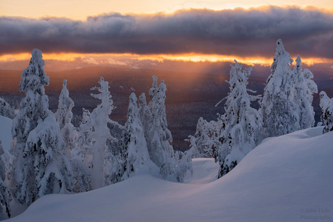 Winter's Gold