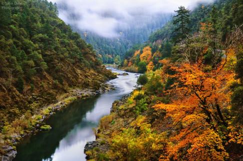 Rogue Autumn