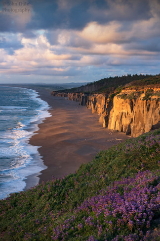 Coastal Vibes