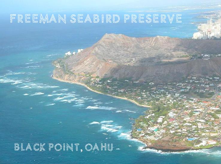 Freeman Seabird Preserve