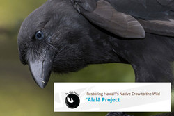 ʻAlalā Project