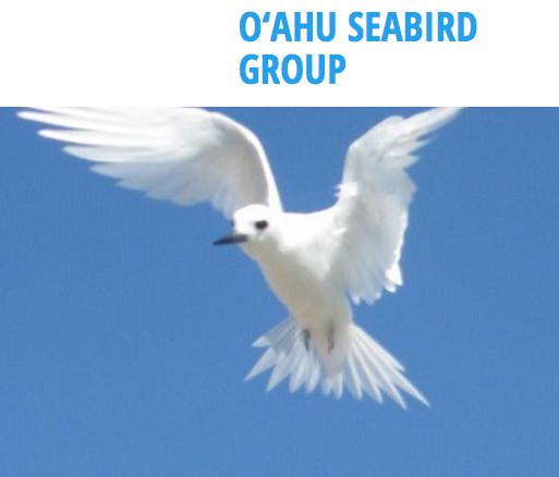 O'ahu Seabird Group