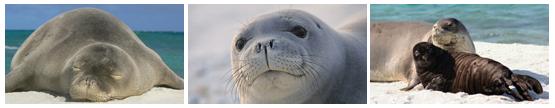 Hawaii Monk Seal Project