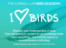 Cornell Lab Bird Academy