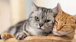 201605-orig-two-cats-949x534