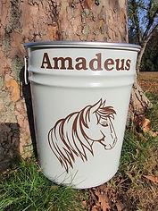 Pferd_Amadeus.jpg