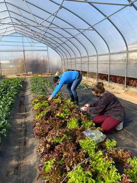 Top Crops Gardening