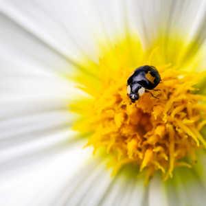 Black ladybug-Edit3.jpg