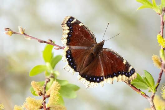 Montana butterfly-6492.jpg