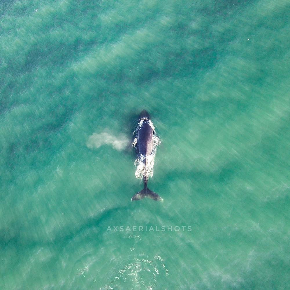 Dji Mavic pro - Pismo beach California
