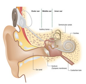 Cochlear Ear