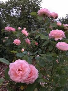 Wisteria House Garden