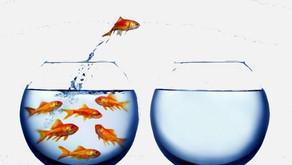 Success Requires Discomfort