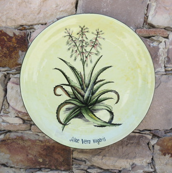 Aloes y Philocactus n°1