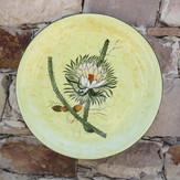 Aloes y Philocactus n°8