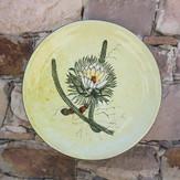 Aloes y Philocactus n°2