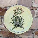 Aloes y Philocactus n°9